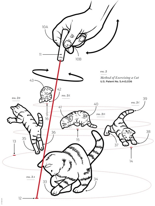 Method of Exercising a Cat