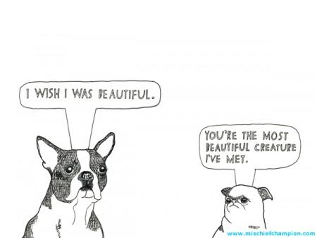 Aaah, Boston Terriers.