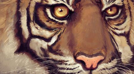 TigerLCS