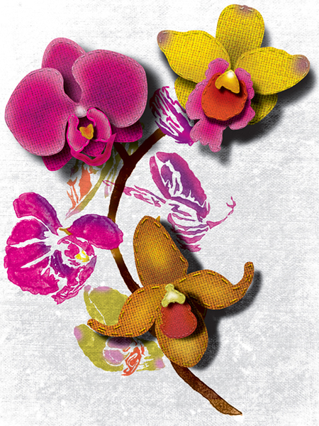 orchidlcs