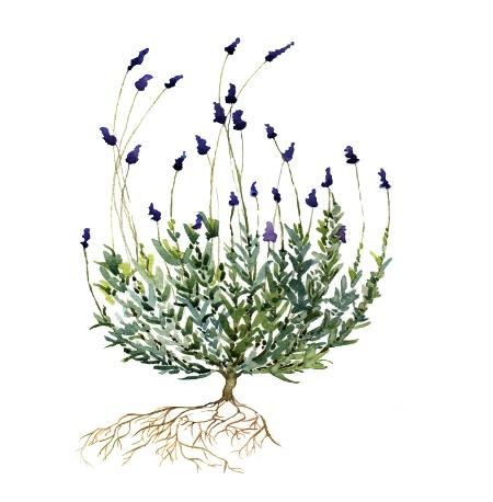 450single-lavender